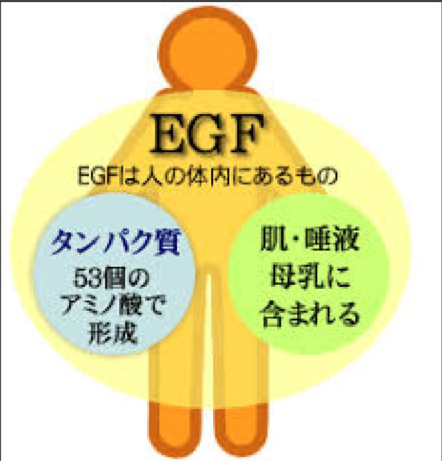 第611回 EGFの使い方